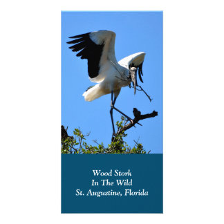 Wood Stork in The Wild Card