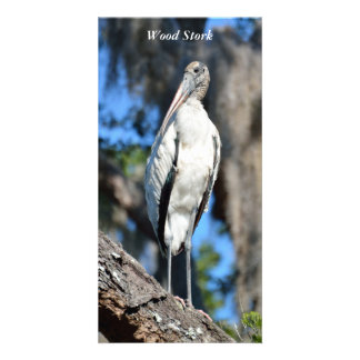 Wood Stork in the wild photo card