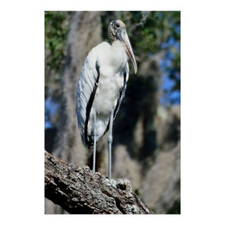 Wood Stork in The Wild Poster