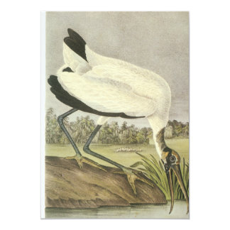 Wood Stork, John Audubon Card