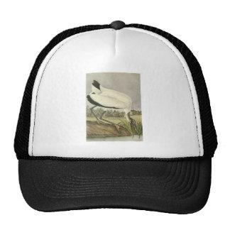 Wood Stork, John Audubon Trucker Hat