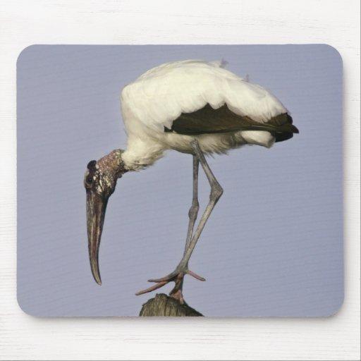Wood Stork Mouse Mats