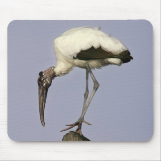 Wood Stork Mouse Pad