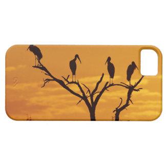 Wood Stork, Mycteria americana,adults at iPhone SE/5/5s Case