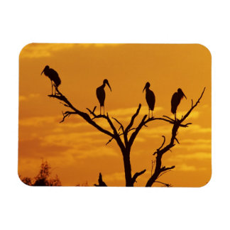 Wood Stork, Mycteria americana,adults at Rectangular Photo Magnet