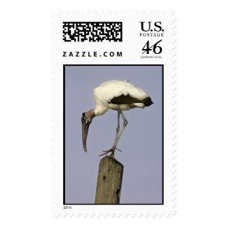 Wood Stork Stamp
