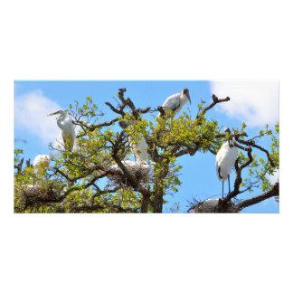 Wood Storks nesting Card