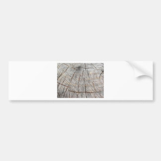 Wood texture of cut pine tree trunk bumper sticker