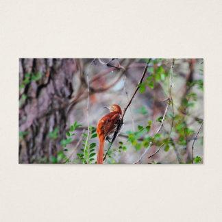 Wood Thrush Bird on Branch 2 Business Card