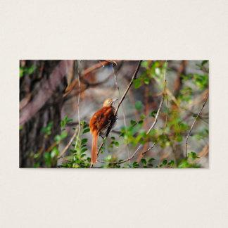 Wood Thrush Bird on Branch Business Card