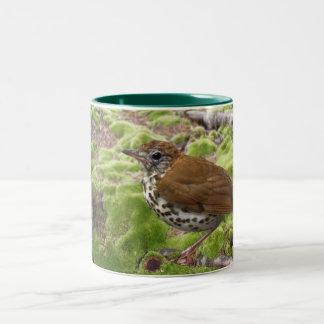 Wood Thrush in Brush Two-Tone Coffee Mug