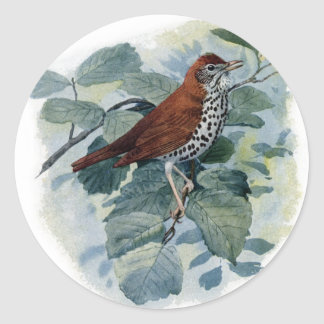 Wood Thrush on a Twig Round Stickers