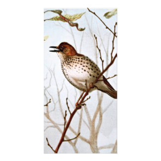 Wood Thrush Vintage Art Personalized Photo Card