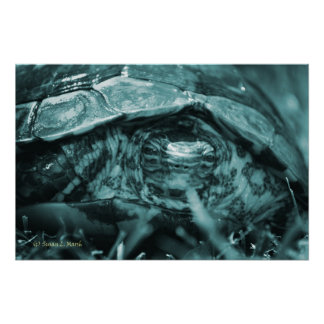 Wood turtle ornate head on in grass blue posters