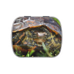 Wood turtle ornate head on in grass jelly belly candy tins
