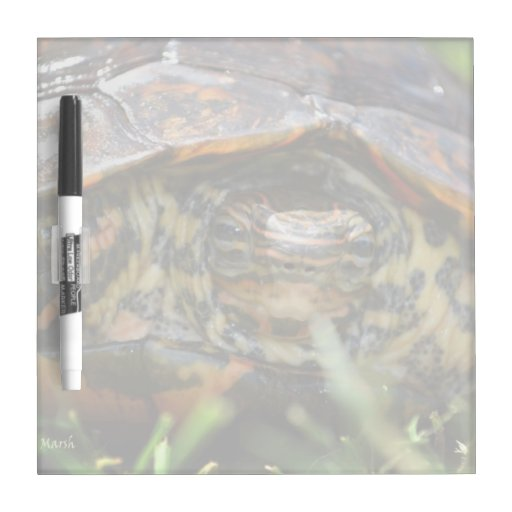 Wood turtle ornate head on in grass dry erase boards