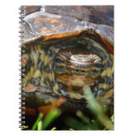 Wood turtle ornate head on in grass note books