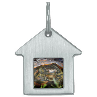 Wood turtle ornate head on in grass pet name tag