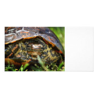 Wood turtle ornate head on in grass photo card