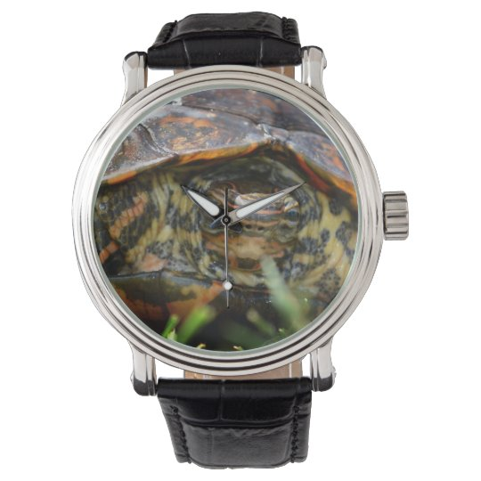 Wood turtle ornate head on in grass watch
