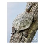 Wood Turtle Postcards