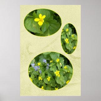 wood violet, spring poster