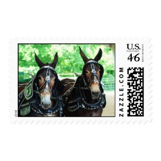 woodbury tn mule show stamps