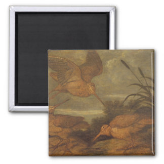 Woodcock at Dusk, c.1676 (oil on canvas) 2 Inch Square Magnet
