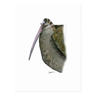 woodcock bird, tony fernandes postcard
