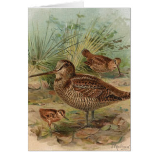 """Woodcock"" Vintage Bird Illustration Card"