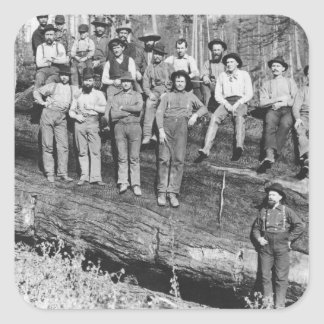 Woodcutters in California, 1891 Square Sticker