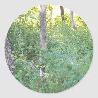 wooded area classic round sticker