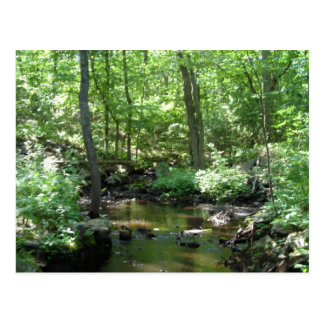 Wooded Creek Postcard