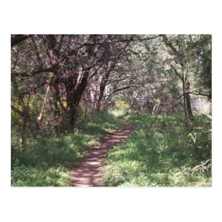 Wooded Dante s Trail Postcard