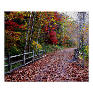 Wooded Path Poster