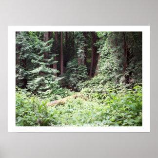 Wooded Wonderland Poster