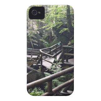 Wooden bridge in the forest blackberry cases