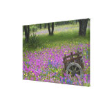 Wooden Cart in field of Phlox, Blue Bonnets Stretched Canvas Print