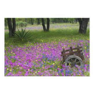 Wooden Cart in field of Phlox, Blue Bonnets Photo Print