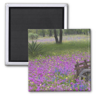 Wooden Cart in field of Phlox, Blue Bonnets with 2 Inch Square Magnet