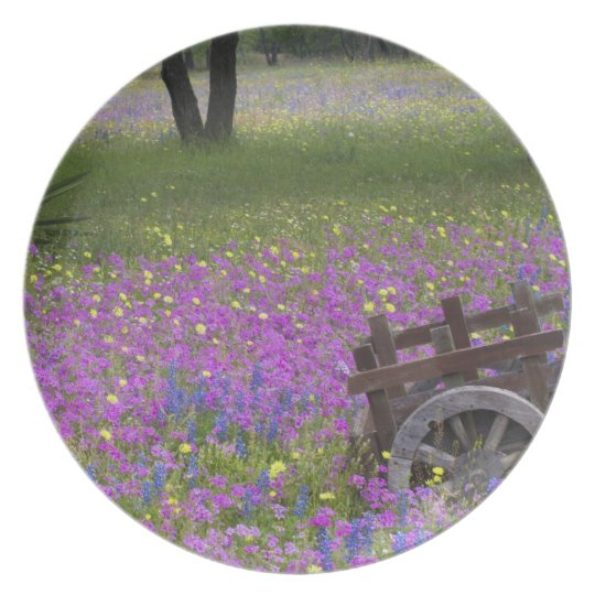 Wooden Cart in field of Phlox, Blue Bonnets with Melamine Plate