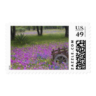 Wooden Cart in field of Phlox, Blue Bonnets with Postage