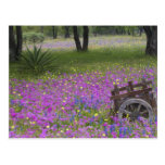 Wooden Cart in field of Phlox, Blue Bonnets with Postcard