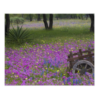 Wooden Cart in field of Phlox, Blue Bonnets with Poster