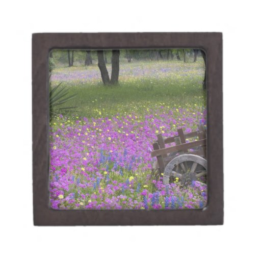 Wooden Cart in field of Phlox, Blue Bonnets with Premium Gift Box