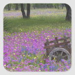 Wooden Cart in field of Phlox, Blue Bonnets with Square Sticker