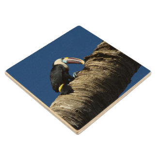 Wooden Coaster - Tucan - Venezuela