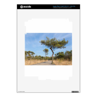 Wooden path for hikers in forest with pine trees.j skin for iPad 3