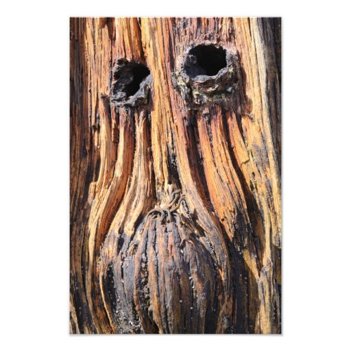 """Woodface"" - Lindisfarne, Northumberland print Photo Print"