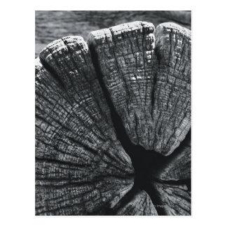 Woodgrain detail postcard